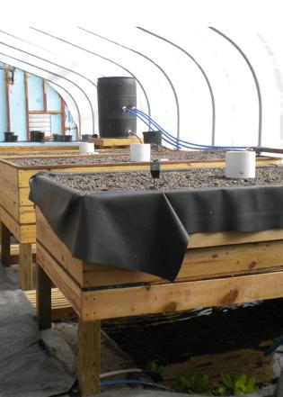 Nexus aquaculture system